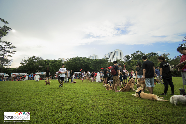 Dog events in Singapore review