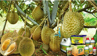 Paket Pupuk Nasa untuk Durian
