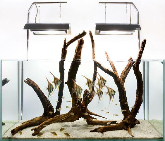 hồ thủy sinh không trồng cây của AquadesignGroup