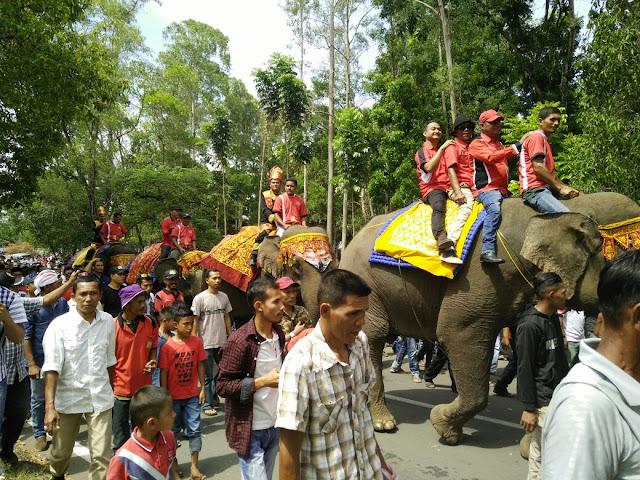 Gajah Dipakai Antar Kandidat Bupati, Begini Kata Kepala BKSDA Aceh...