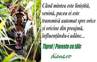 Tigrul | Poveste cu tâlc