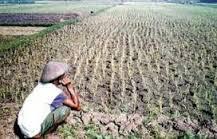 Sebab - Sebab Terjadinya Degradasi Lahan Pertanian