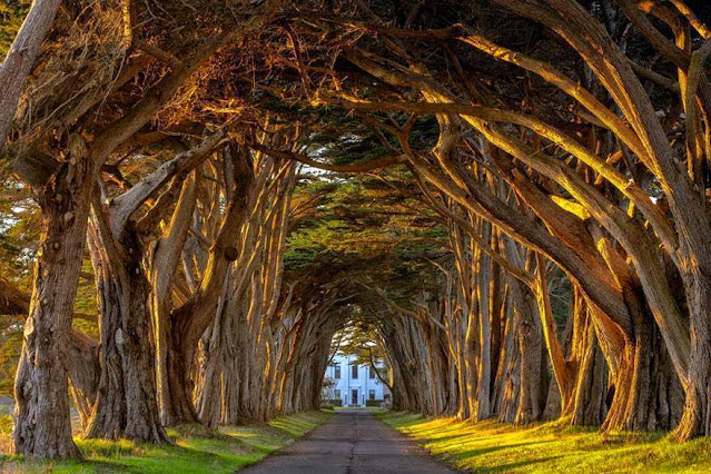 Magicni tuneli od stabala.