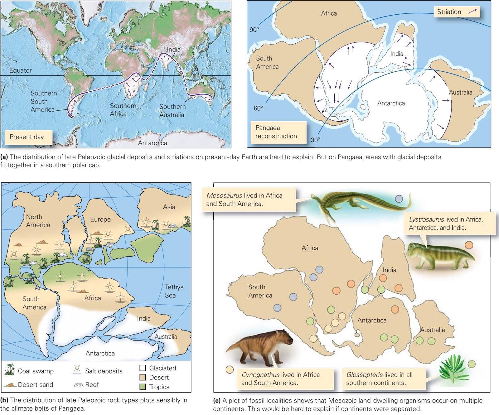 Wegener S Evidence For Continental Drift Learning Geology