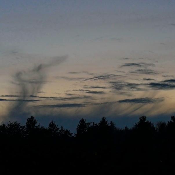 Wetterwechsel, Wald, Silhouette, Luft, strömung, wolken