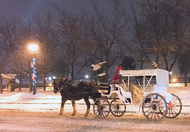 a horse drawn carriage in Montreal