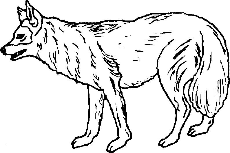 Maestra De Primaria Dibujos De Animales Salvajes Para Colorear