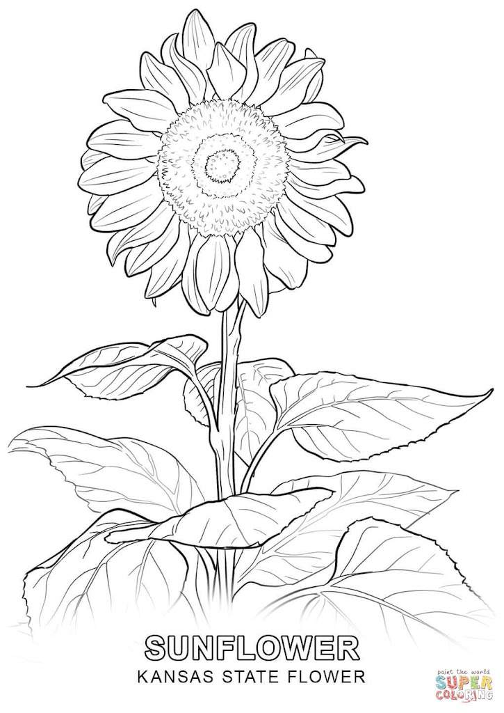Top 10 Sunflower Drawings Coloring Pages Photos