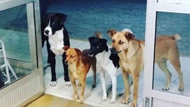 Άστεγος μπήκε στο νοσοκομείο και ο σκύλος του μαζί με τους φίλους του τον περιμένουν μέχρι να γίνει καλά