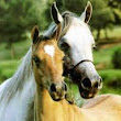 Colloidal Silver Use with Horses