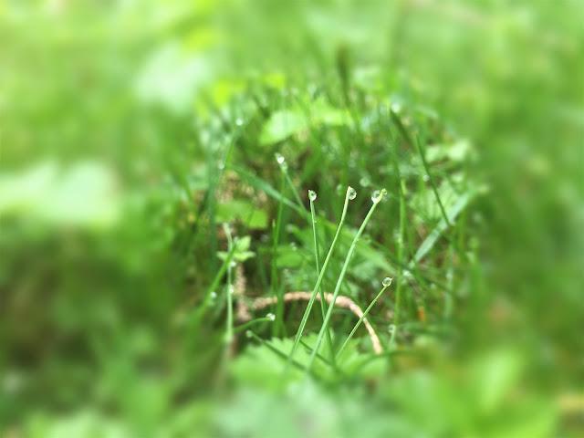 Tautropfen auf dem Gras