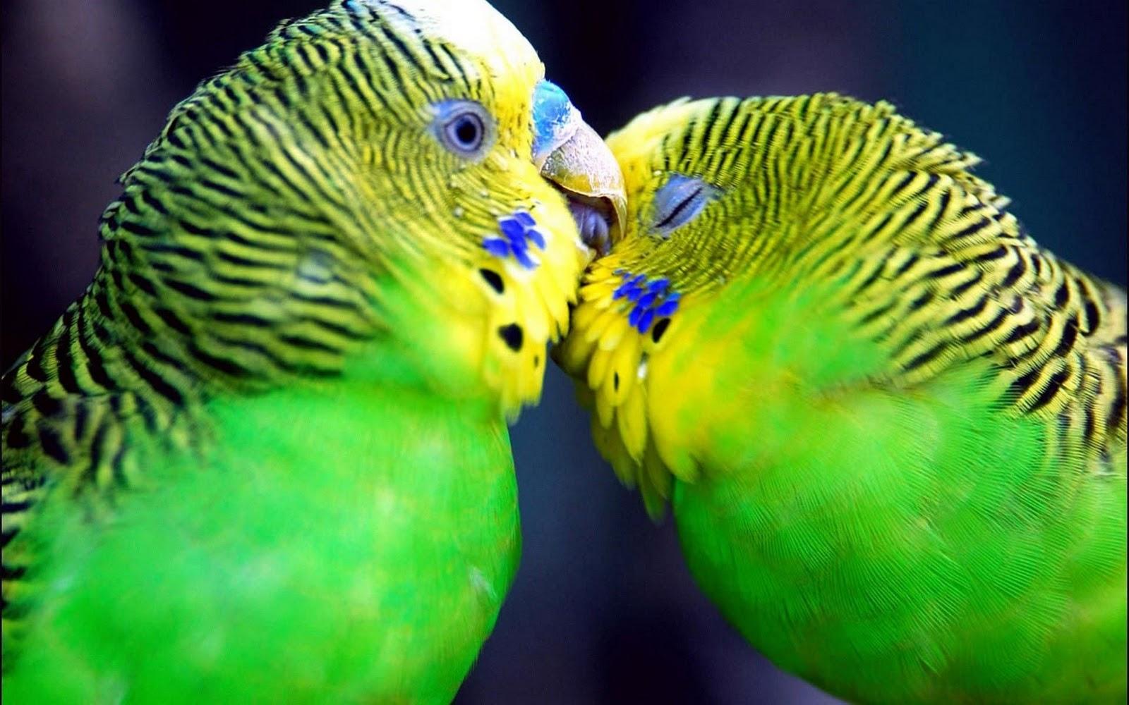 Wallpapers Love Birds: PicturesPool: Love Birds Wallpapers