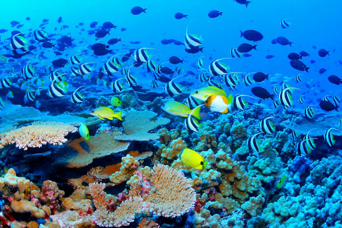 Great Barrier Reef One Of The Seven Natural Wonders Of The