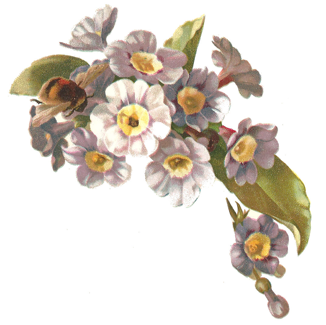 Free Flower Clip Art Antique Victorian Illustration Of Purple Flowers With Yellow Centers