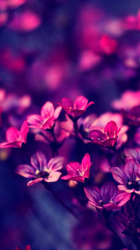 Purple Wallpaper Smart Wallpapers