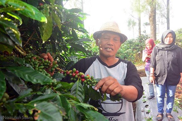 Pak Yamidi menerangkan tentang kopi di Tlahab