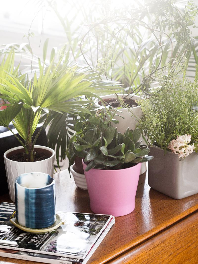 Plants Candle