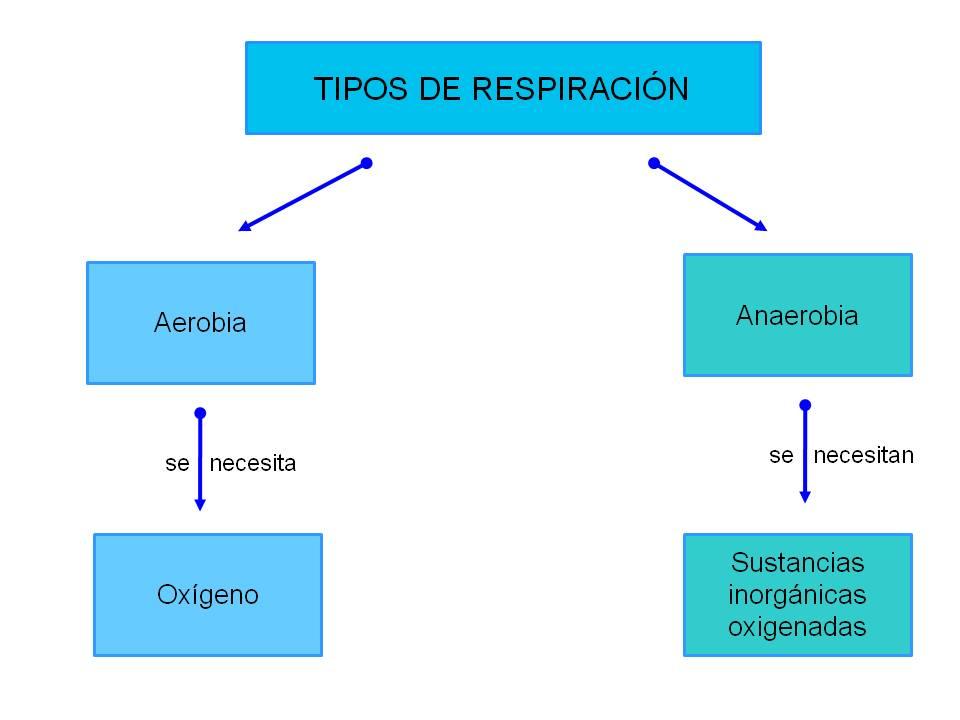 RESPIRACION AEROBIKA Y ANAEROBICA DOWNLOAD