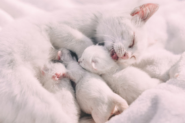 Cute cat image with baby cat