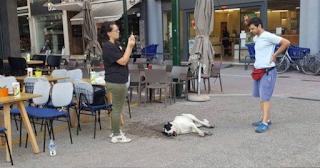 Ντροπή: Ανθρωπόμορφα κτήνη έριξαν φόλες και σκότωσαν δεκάδες αδέσποτα ζώα στον Αλμυρό