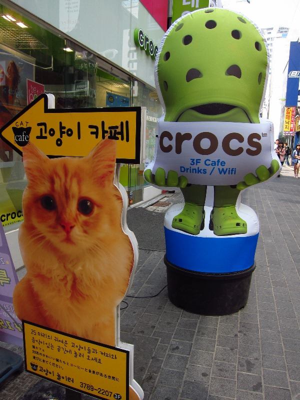 Cat's Playground (고양이 놀이터): Cat Cafe