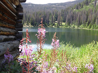 Wild flowers along the bank of Boss Lake.