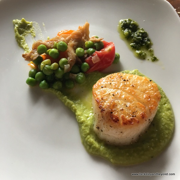 scallop with pea sauce at Motor Supply Company Bistro in Columbia, South Carolina
