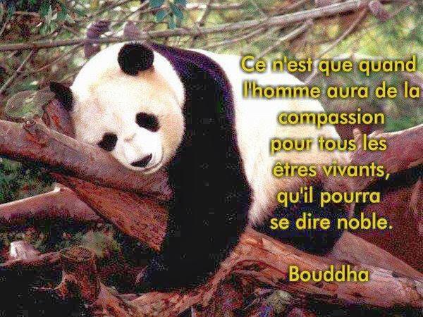 Super Citations option bonheur: Citation de Bouddha sur la compassion OF07