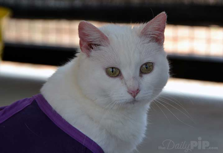 Snowflake is a resident of Quincy House at Best Friends