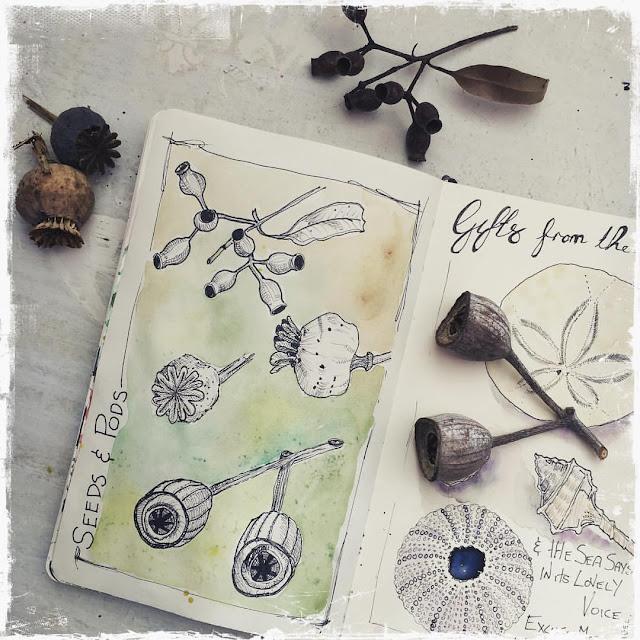 Sketchbook Challenge Galia Alena gum nuts and pods