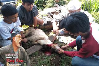 Layanan Catering Aqiqah Kang Asep