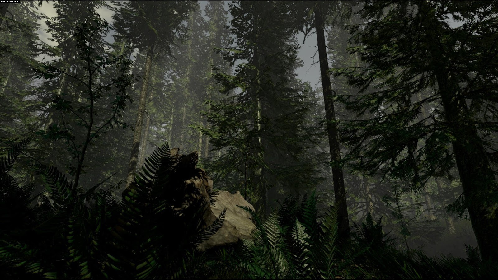 Forest Pc
