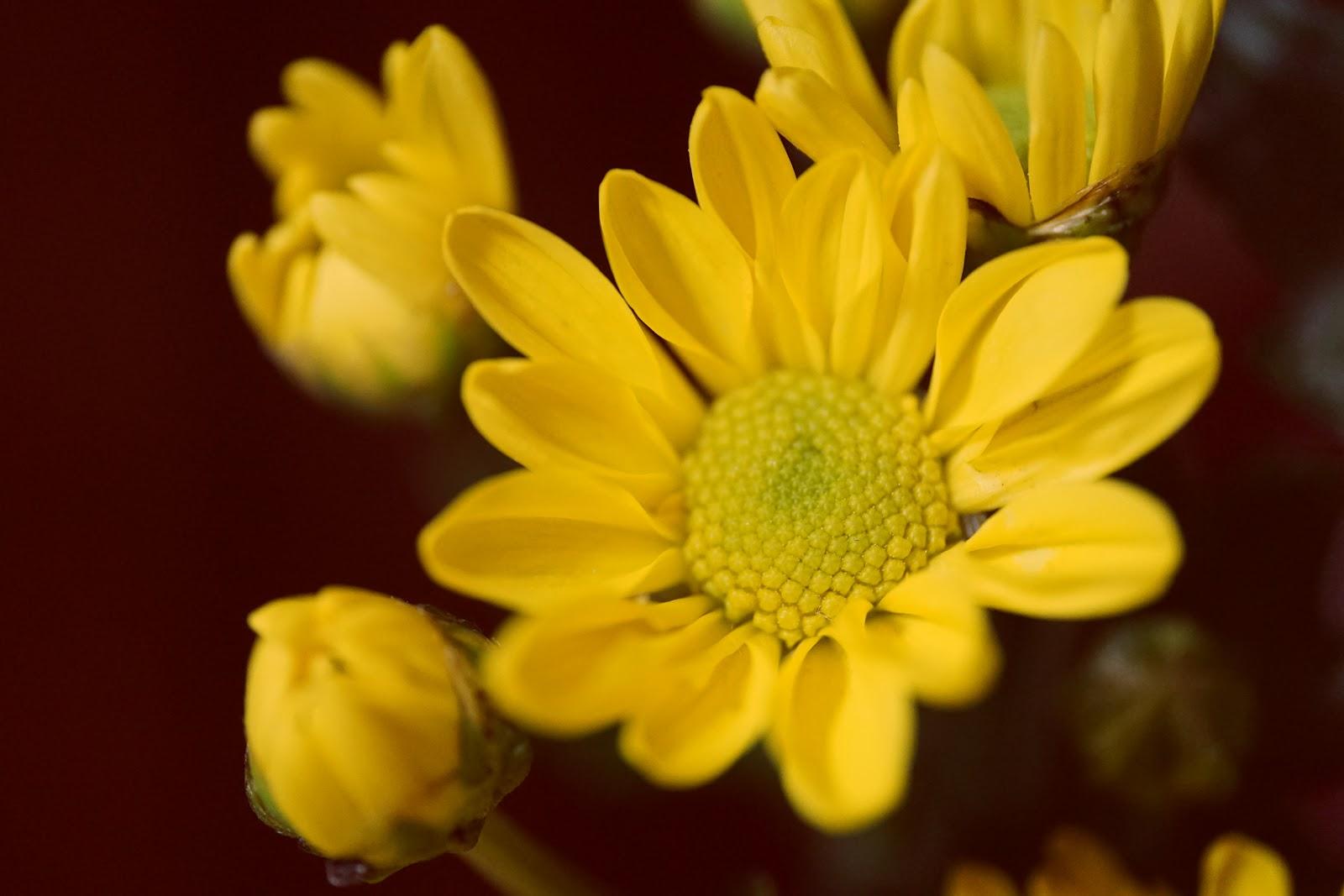 黄色の小さめの花