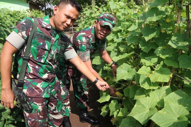 Manfaatkan Lahan Kosong, Danyonif Raider 509 Kostrad Ikut Panen Sayuran