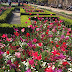 Keindahan Tulip Dari Holland Park, Kensington ,London