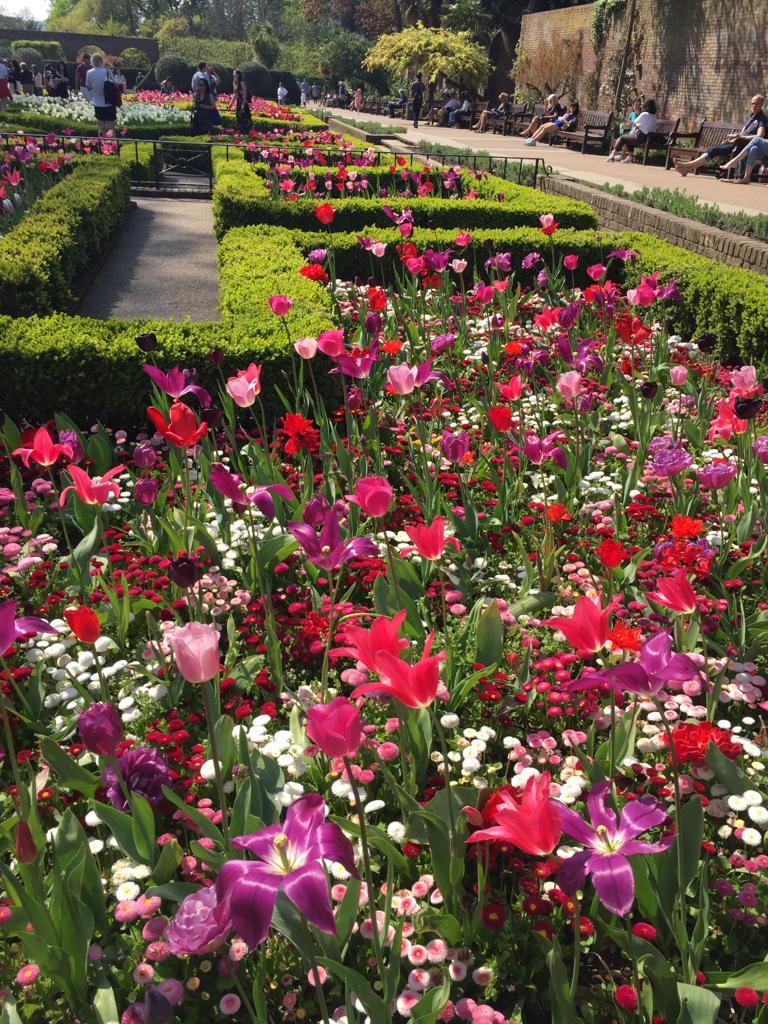 Keindahan Tulip Dari Holland Park, Kensington ,London