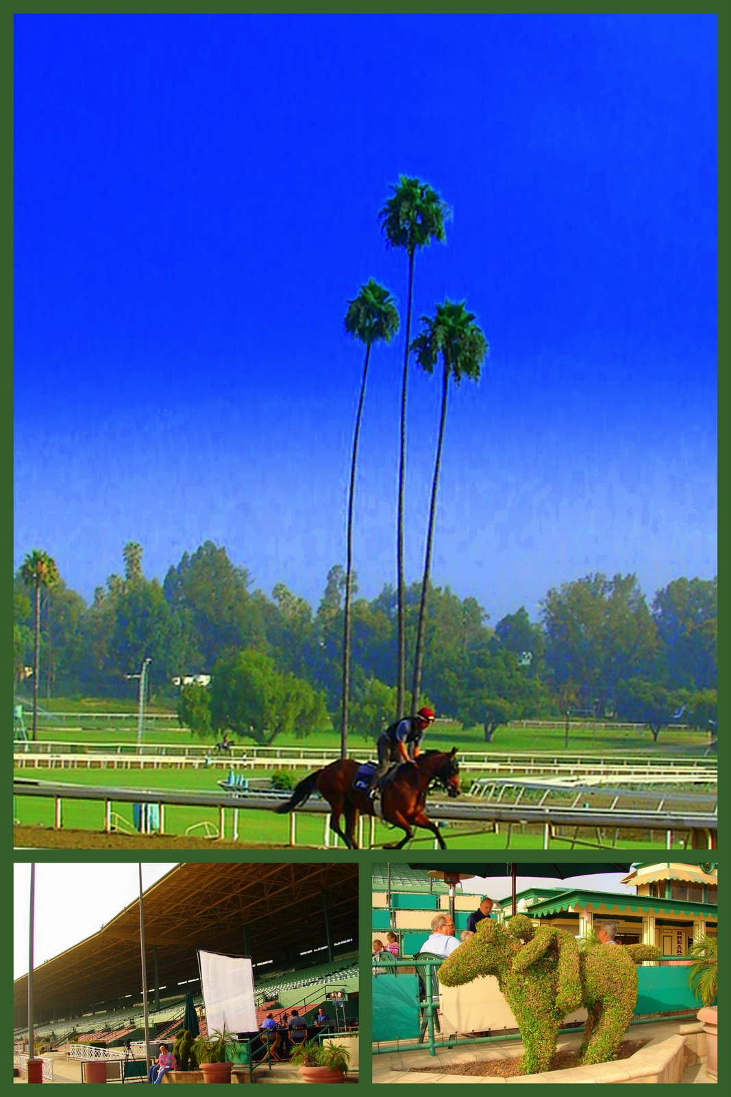Expeditions By Tricia Santa Anita Park Expedition