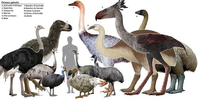 Prehistoric, Carnivorous Birds