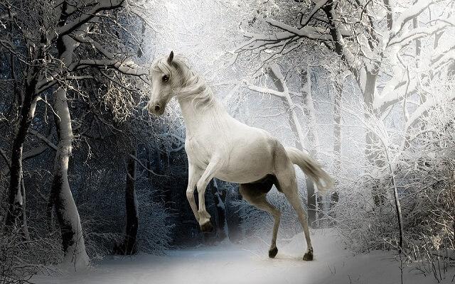 at kış