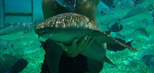 Nade com animais marinhos no Parque Xcaret em Cancún
