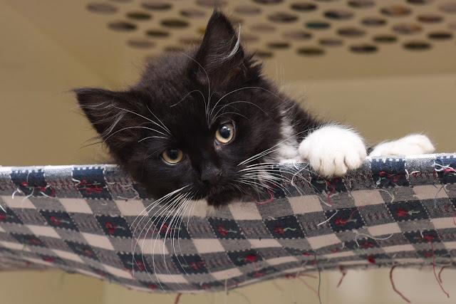 kitten, shelter kitten, getting 2 zero