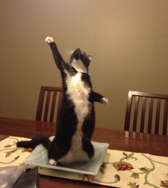 14 biểu cảm chứng tỏ mèo là bọn diễn sâu nhất quả đất