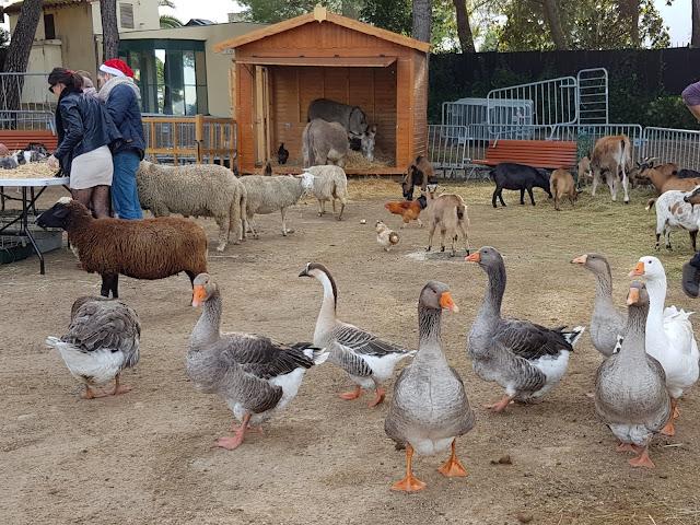 Small farm, Jardin de la Pinède