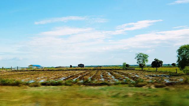 Изображение поля в Камбодже