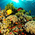 Inilah Pengertian dan Contoh Ekosistem Alami dan Ekosistem Buatan