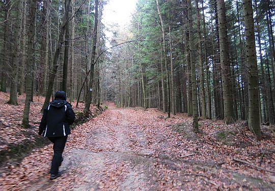 Szlak przez las.