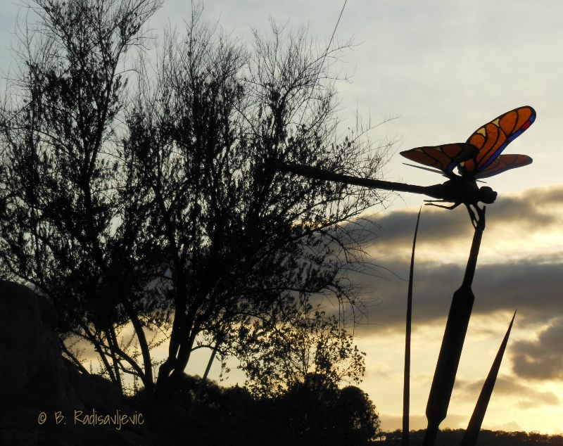 Wordless Wednesday: Butterfly at Sundown at Kennedy Fitness in Paso Robles