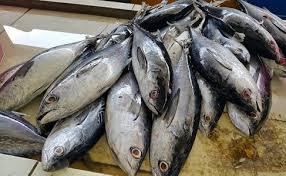 Kemunduran Mutu Ikan