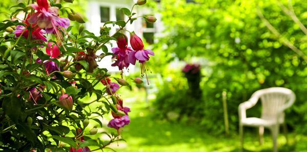Tips Memperindah Taman Kecil di Rumah Minimalis