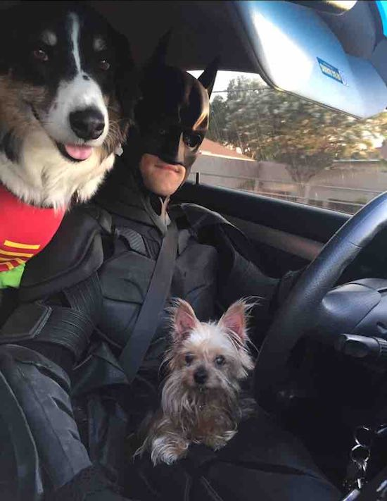 Guy Dressed As Batman Rescues Shelter Pets From Euthanasia